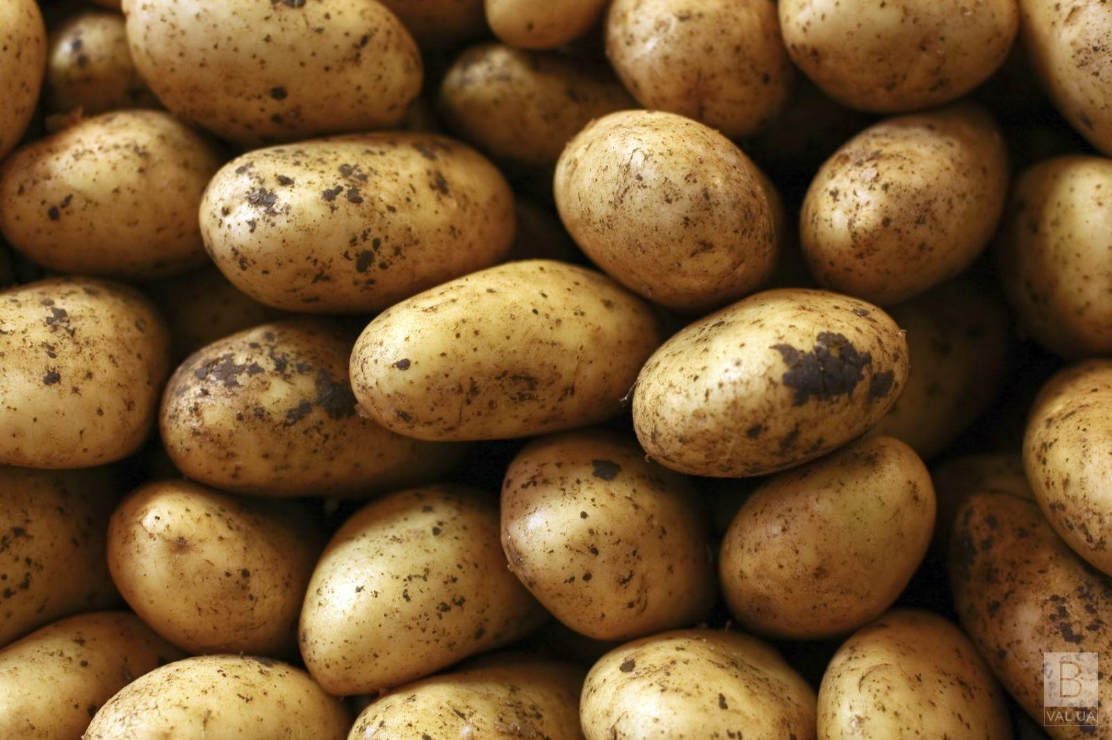 Картопля в Україні не вродила і дорожчатиме, — експерт інституту картоплярства