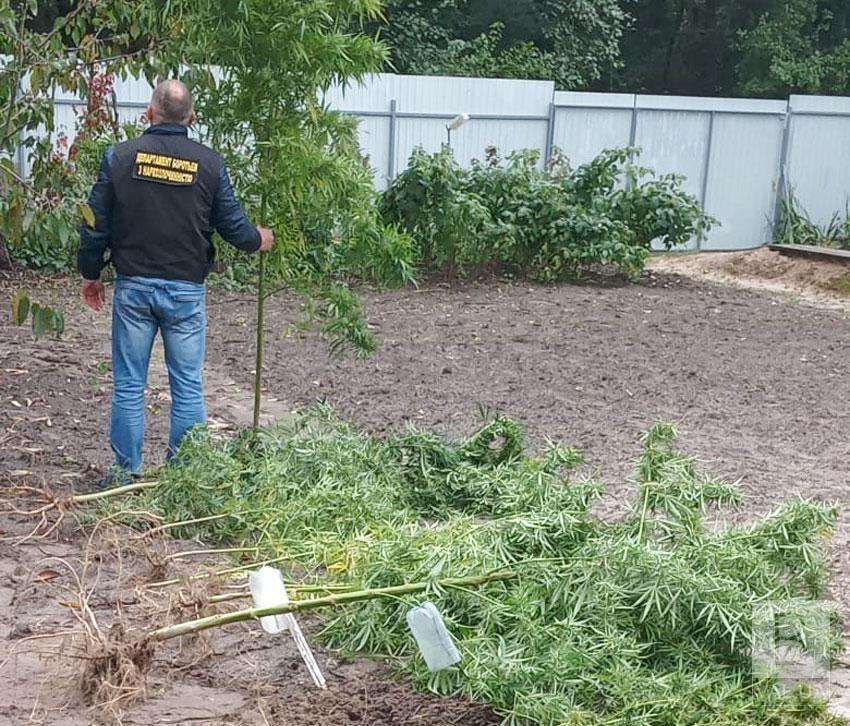 На дачі під Черніговом чоловік у себе на городі вирощував коноплі. ФОТО