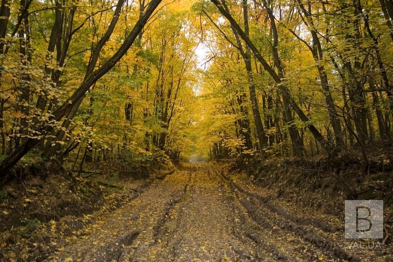 В лісі біля села Дніпровське заблукав 32-річний чернігівець