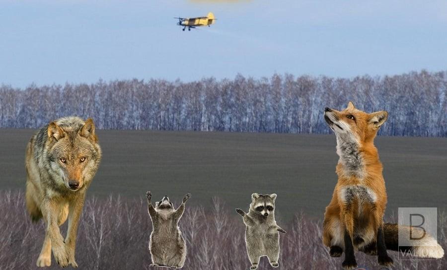 На Чернігівщині з літаків розкидатимуть вакцину проти сказу диких тварин