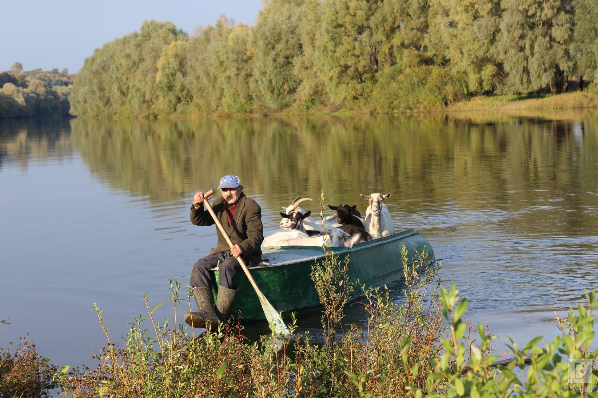 Вже 30 років: на Чернігівщині дідусь щодня перевозить кіз на пасовище через річку. ФОТО