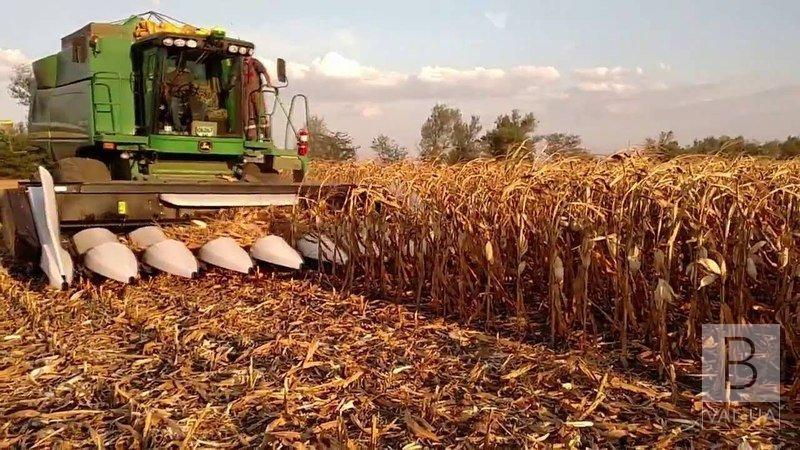 Рекордний врожай кукурудзи на Чернігівщині: область стала першою серед 16 регіонів України