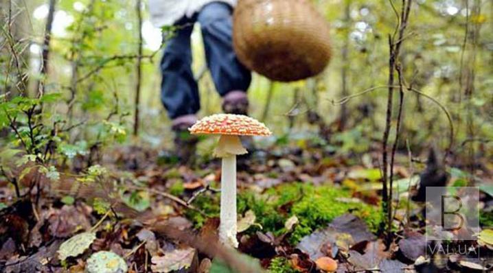 Отруївся грибами: у Чернігові помер 26-річний чоловік