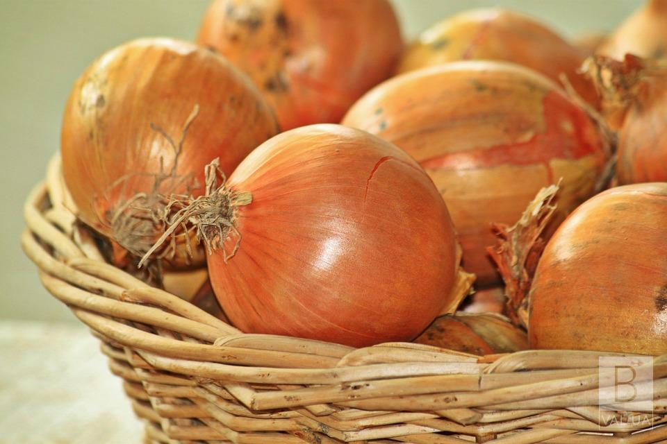 На Чернігівщині вивели новий сорт ріпчастої цибулі «Галичанка»
