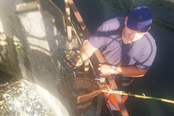 У Чернігові надзвичайники врятували з пастки 15 каченят, черепаху та вужа. ФОТО