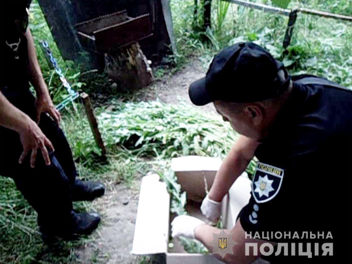 У Чернігові поліцейські знищили ділянку, де вирощувалося близько 350 рослин снодійного маку. ФОТО