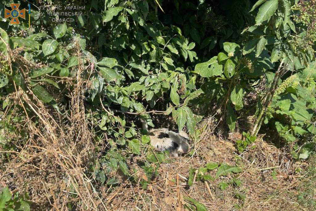 У Чернігові рятувальники повернули лелеченя, яке випало з гнізда, стурбованим батькам. ФОТО