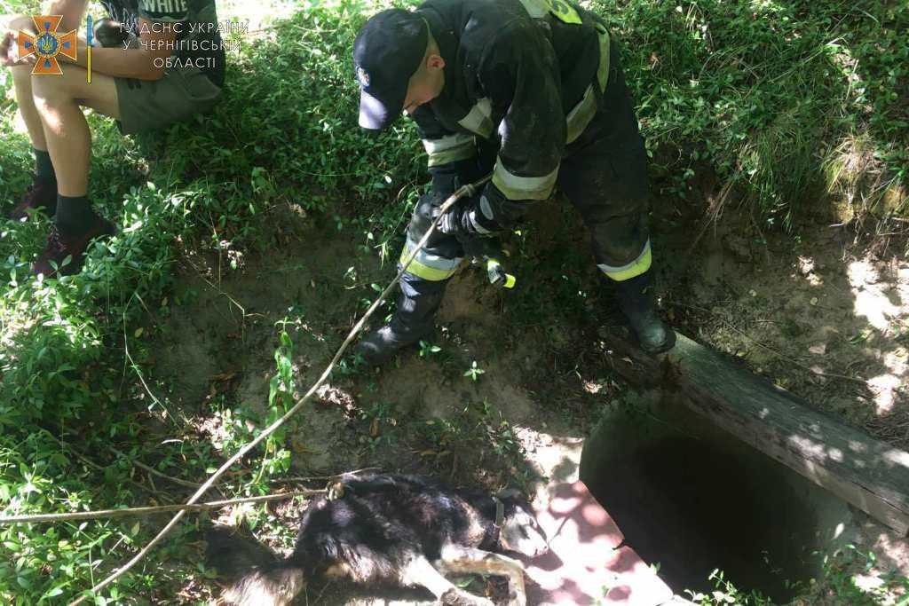 Пробув у пастці не одну добу: на Чернігівщині рятувальники витягли собаку, яка впала у колодязь. ФОТО