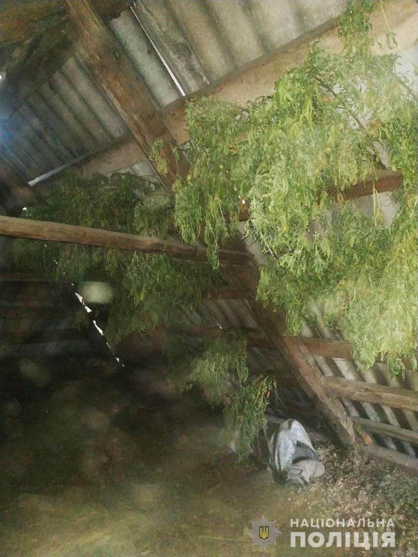 Житель Семенівки на своїй присадибній ділянці культивував коноплі. ФОТО