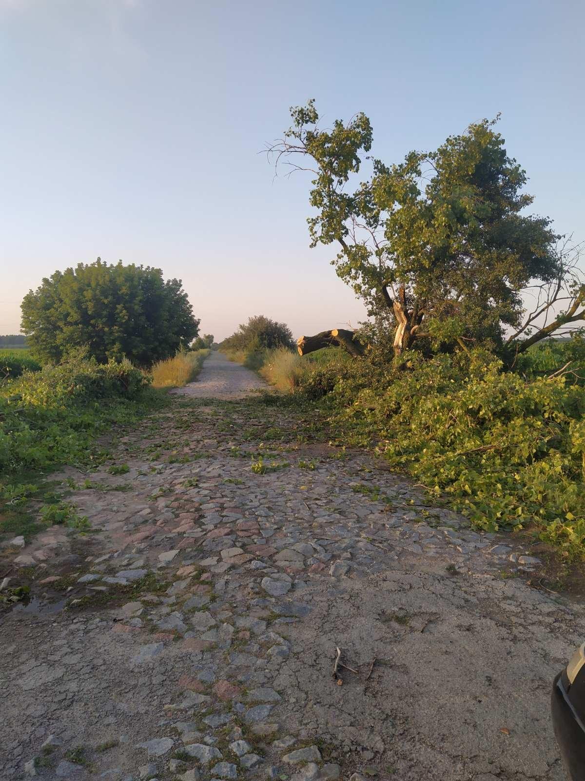 На Козелеччині дерево заблокувало дорогу до села. ФОТОфакт