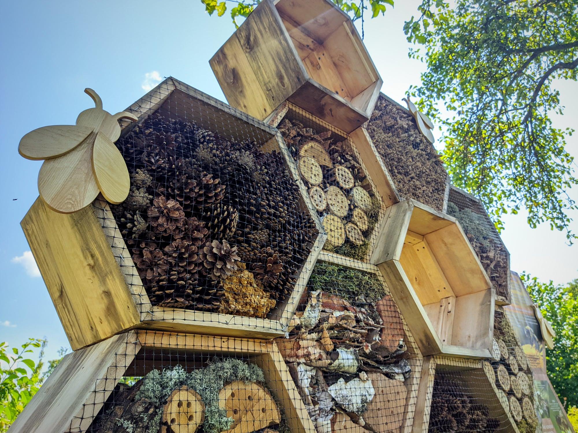 У музеї на Чернігівщині влаштували готель для комах. ФОТО