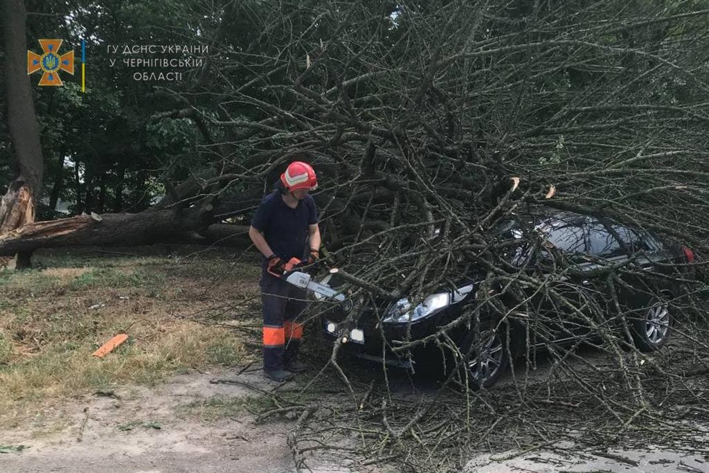 У Чернігові дерево впало на автівку. ФОТО