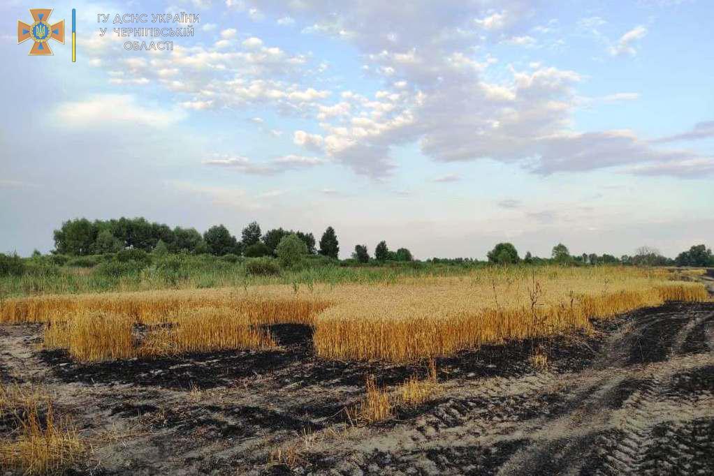 На Чернігівщині згоріло 55 гектарів пшеничного поля та 10 – сухої рослинності та чагарників