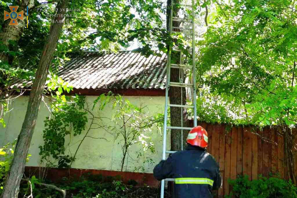 Врятували пухнастика: на Чернігівщині рятувальники дістали кота з дерева. ФОТО