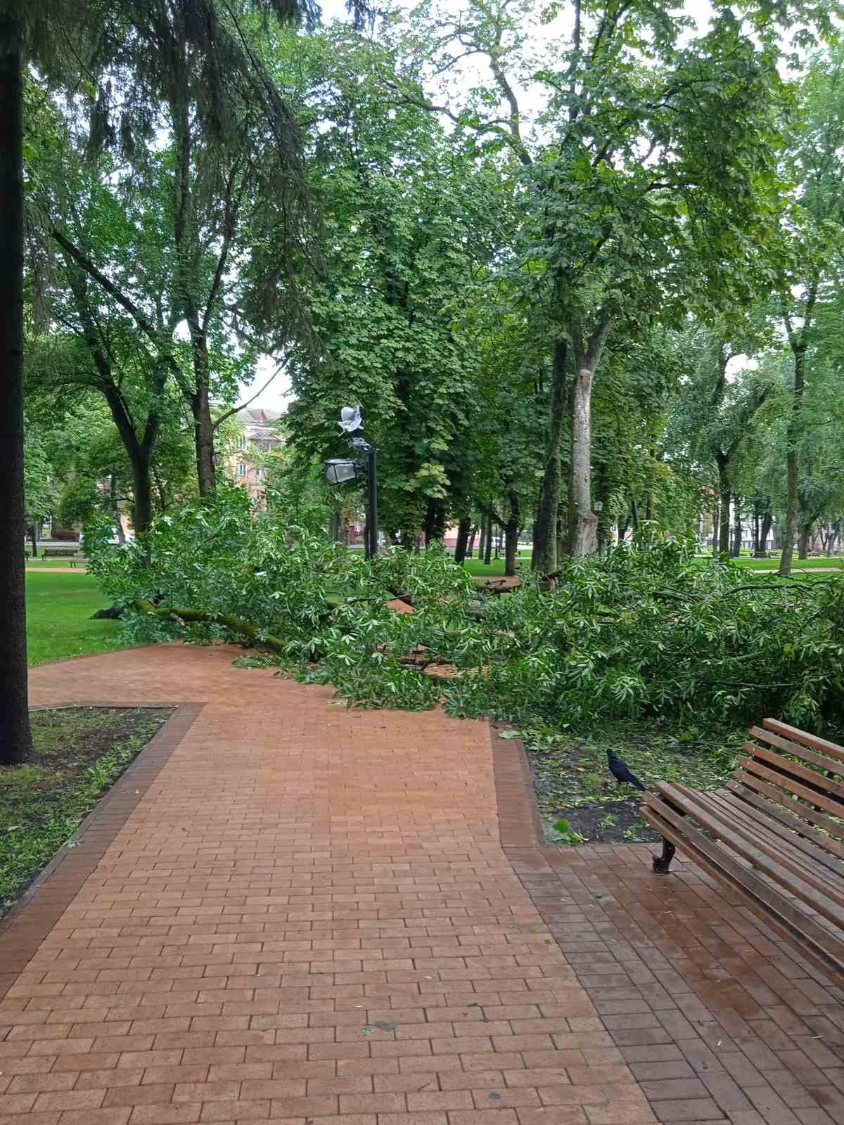 В історичному центрі Чернігова через негоду впав аварійний ясен та розтрощив ліхтар. ФОТОфакт