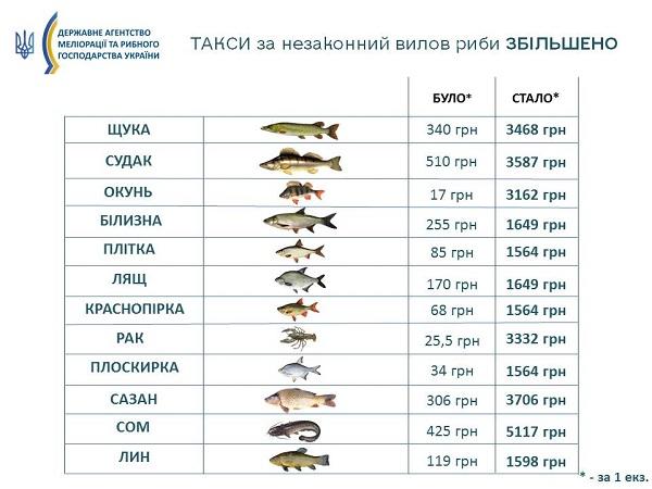 За незаконний вилов риби: штрафи підвищили у 7-186 разів