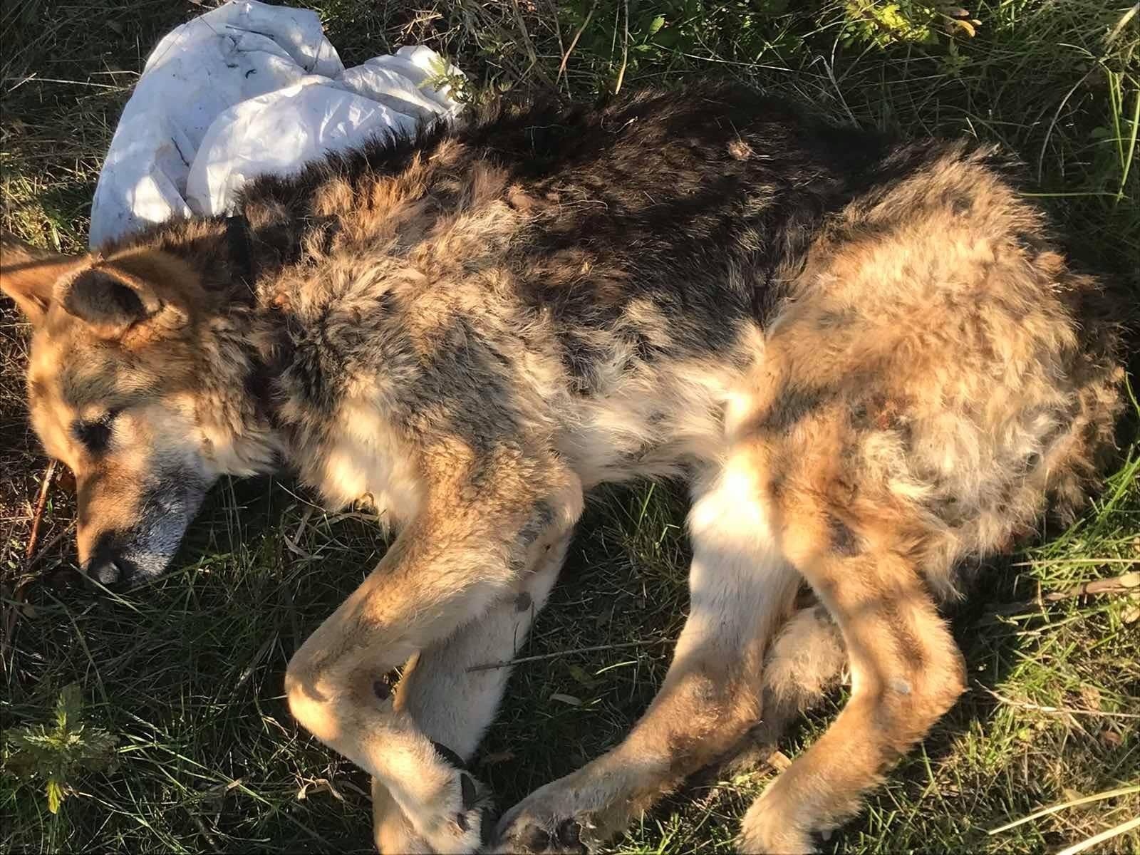 Чернігівські надзвичайники врятували собаку, яка тонула в річці неподалік Брусилова. ФОТОфакт